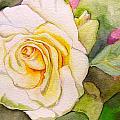 White Rose by Jamie Clack
