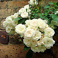 White Roses by Chandrima Dhar