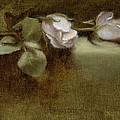 White Roses by Christy Olsen