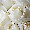 White Roses by Garry Gay