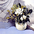 White Roses by Julia Rowntree