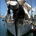 White Sail   by Daniel Jakus