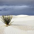 White Sands Dark Sky by Bob Christopher