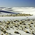 White Sands National Monument-098 by David Allen Pierson
