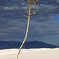 White Sands National Monument 2 White Sands New Mexico by Mike Nellums