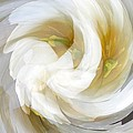 White Satin Swirl by BackHome Images
