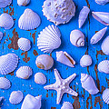 White Sea Shells On Blue Board by Garry Gay