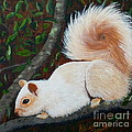 White Squirrel Of Sooke by Alicia Fowler