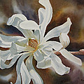 White Star Magnolia Blossom by Sharon Freeman