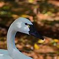 White Swan by Helene Dignard