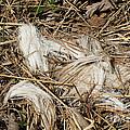 White-tailed Deer Hair by Linda Freshwaters Arndt