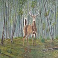 White-tailed Deer - Impressionistic by Dana Carroll