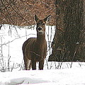 White-tailed Winter Stand  by Neal Eslinger