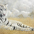 White Tiger by Lucie Bilodeau