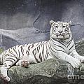White Tiger On A Rock  by Anek Suwannaphoom
