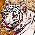 White Tiger Twist by Cathy Donohoue