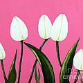 White Tulips On Pink by Barbara Griffin