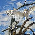 White Wide Wings by Evelyn Harrison