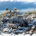White Winter In The Desert Of Tucson Arizona by Michael Moriarty