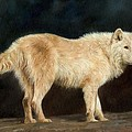 White Wolf by David Stribbling