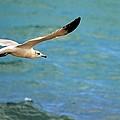 Whitebird by Jody Lane