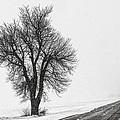 Whiteout by Chris Austin