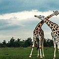 Who Is Taller by Chakravarthy Kotaru