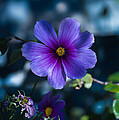 Who You Calling A Pansy? by Rich Priest