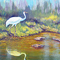 Whooping Crane - Searching For Frogs by Brent Ciccone