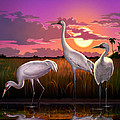 Whooping Cranes Tropical Florida Everglades Sunset Birds Landscape Scene Purple Pink Print by Walt Curlee