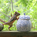 Who's Been In The Cookie Jar? by Peggy Collins