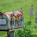 Whose Mailbox This Is I Think I Know by Scott Thorp