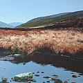 Wicklow Bogscape by Tony Gunning
