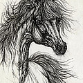 Wieza Wiatrow Polish Arabian Mare Drawing by Angel Ciesniarska
