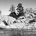 Willow Lake Number One Bw by Heather Kirk