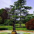 Wilcox Park by Joe Geraci