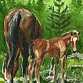 Wild Alberta Mare And Foal by Linda L Martin