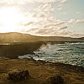 Wild Aruba by Ryan Burton