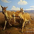 Wild Asses by Cindy Manero