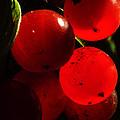 Wild Berries Of The Wetlands 4 by Verana Stark