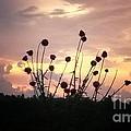 Wild Bouquet by Maria Urso