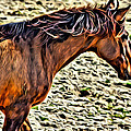 Wild Bronc by Alice Gipson