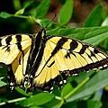 Wild Butterfly by Stephanie  Bland