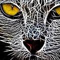 Wild Cat by Steve K