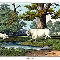 Wild Cattle Of Britain by Splendid Art Prints