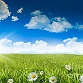 Wild Daisies In The Grass With A Blue Sky by Sandra Cunningham