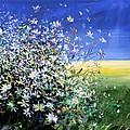 Wild Daisies by Mario Zampedroni