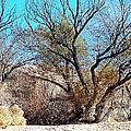 Wild Desert  by Bobbee Rickard