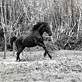 Wild by Edgar Laureano