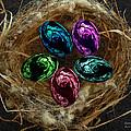 Wild Eggs In My Nest by Barbara St Jean